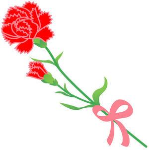 carnation.jpeg